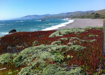 Sonoma Coastline, California, USA