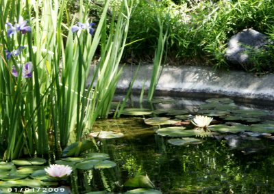 We are experienced at keeping a fish pond