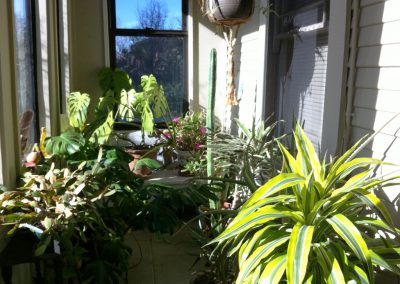 Houseplants on our enclosed porch