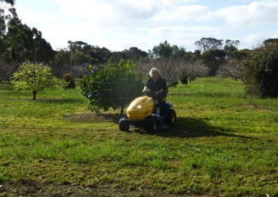 House sitting in Australia, we maintained a 12-acre orchard