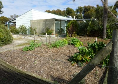 Taking care of the vegetable garden in WA housesit