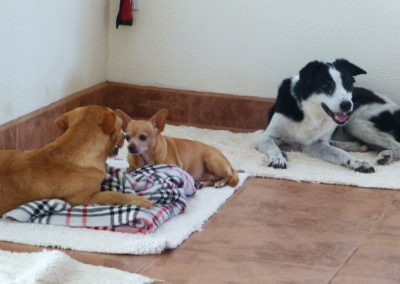 We cared for these three in Costa Rica - Buster, Sugar & Bella